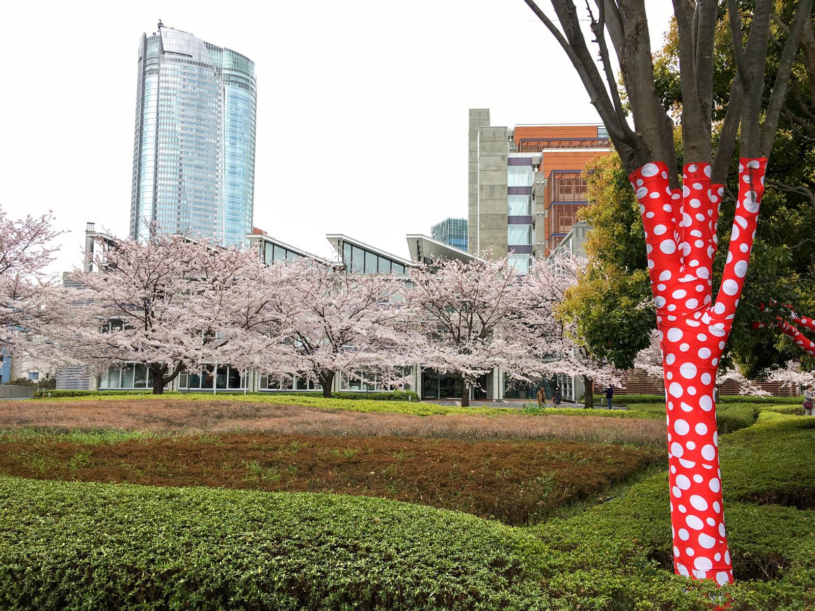 桜と草間彌生
